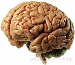 بالا بردن کارایی مغز