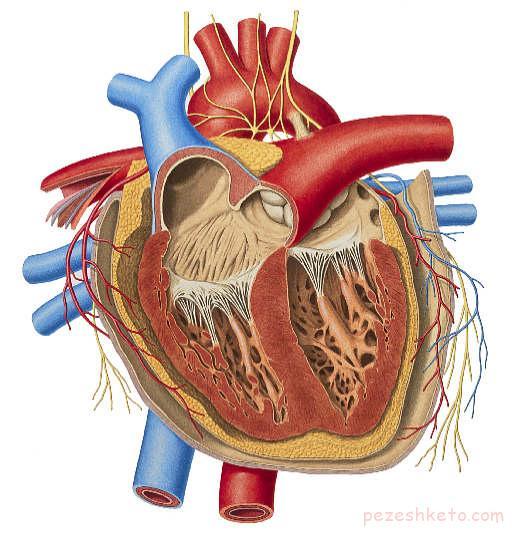 مراقبتهای لازم بعد از جراحی باز قلب