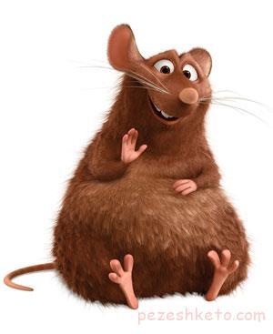بیماریهایی که از موش منتقل می شود