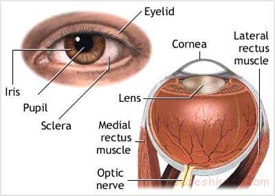 ترومای چشم چیست