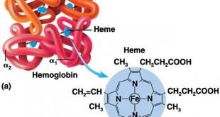 چگونه هموگلوبین در خون را افزایش دهیم