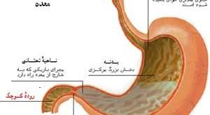 مواد زودهضم و دیر هضم در دستگاه گوارش