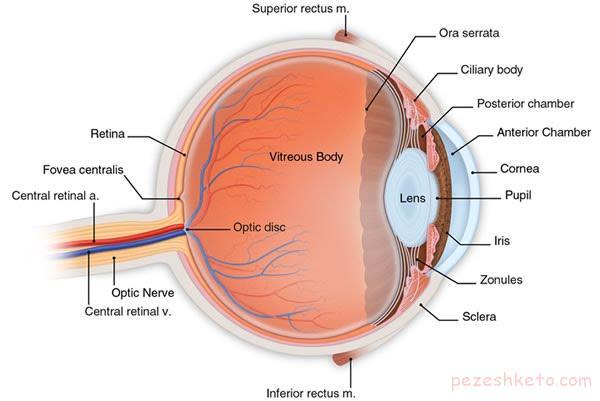 بیماری چشم ها